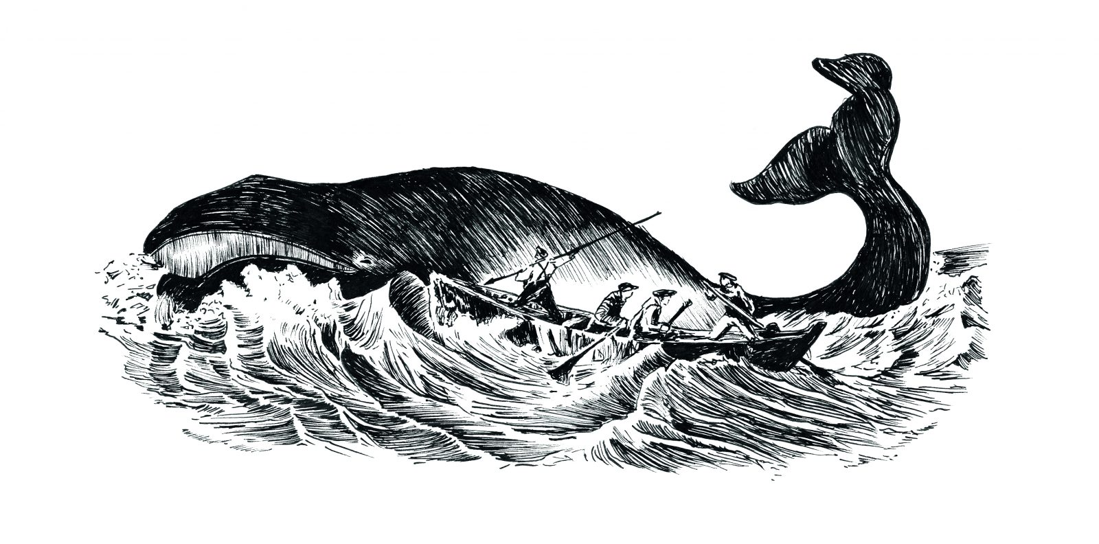 Visite commentée du Sentier baleinier